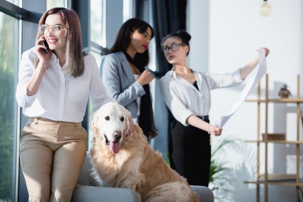 Hund im Büro mit 3 Frauen