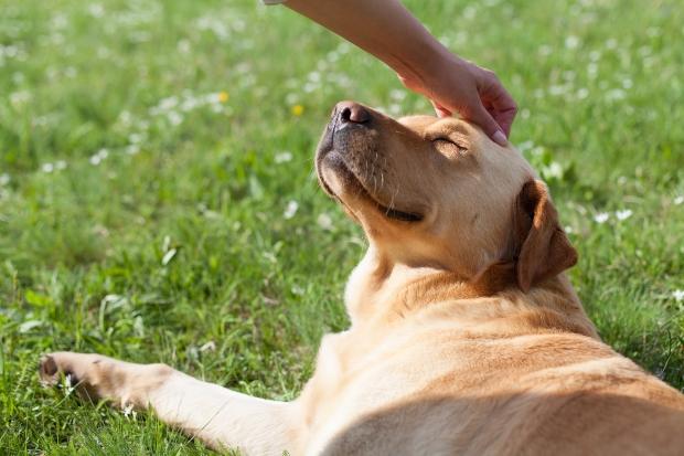Glücklicher Hund wird gestreichelt