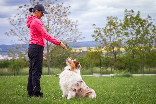 Frau trainiert Hütehund