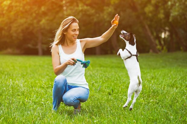 Frau spielt mit Jungem Hund - Welchen Zeitaufwand bringt ein Hund?