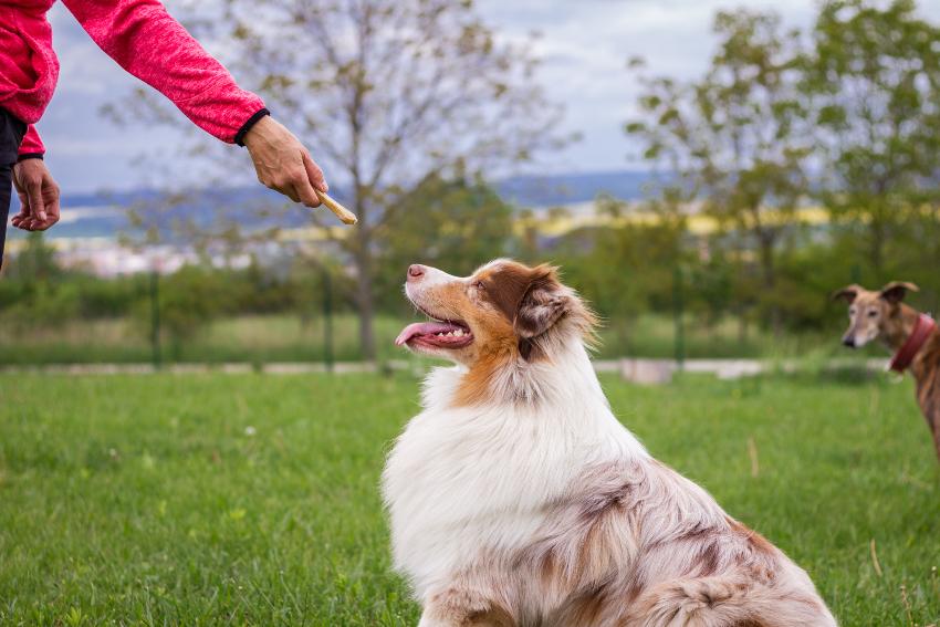 Hund wird mit Hundestick gefüttert