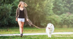 Frau geht mit Hund Gassi - Welchen Zeitaufwand bringt ein Hund?