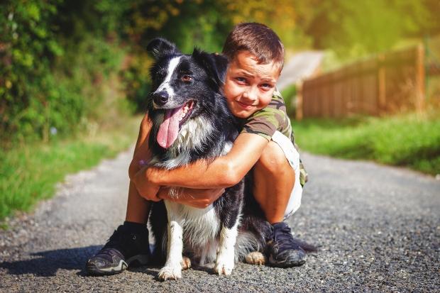 Junge umarmt Border Collie - Hütetrieb bei Hunden