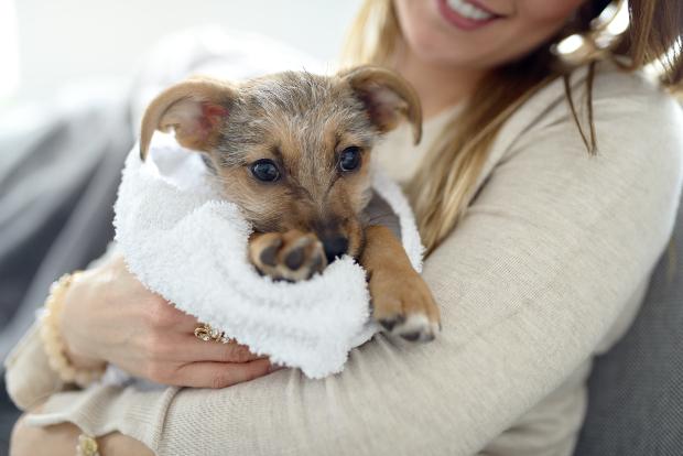Frau trägt jungen Hund im Handtuch auf dem Arm