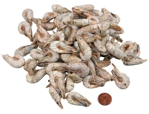 white-shrimps