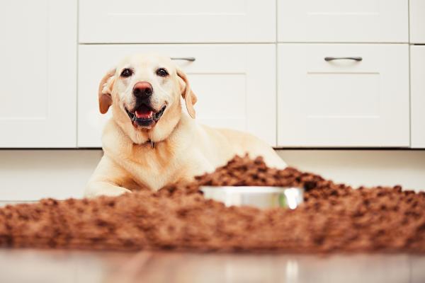 Hund sitzt vor einem Haufen Hundefutter