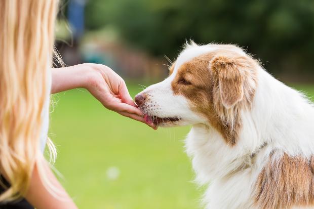 Frauchen füttert Hund mit Hundekausnack