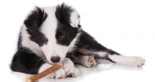 Wildfleisch für Hunde