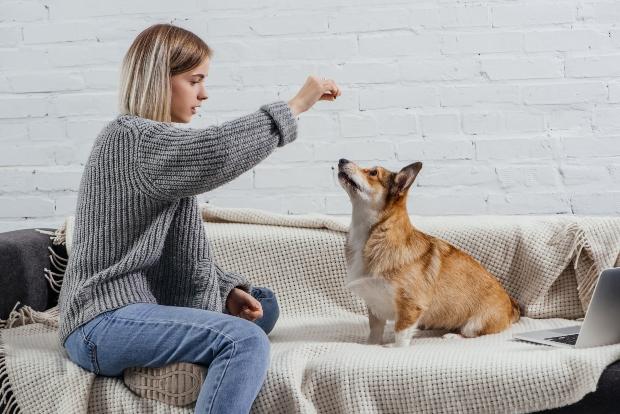 Frau gibt Hund ein Leckerli - Wasserbüffel für Hunde