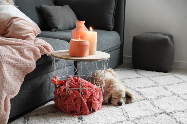 Hund liegt auf Teppich neben brennenden Kerzen