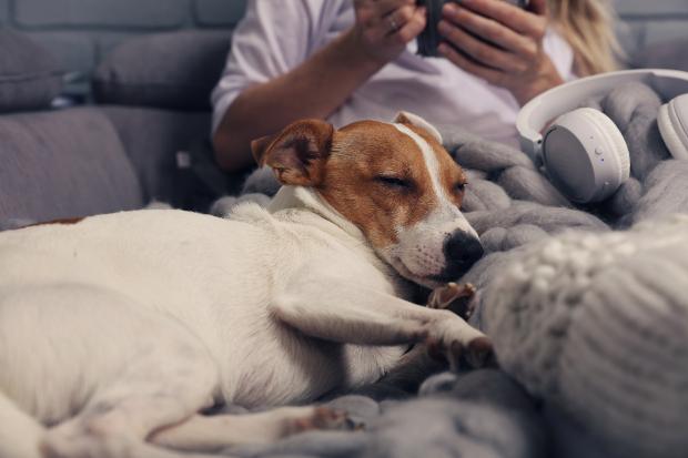 Hund schläft auf Couch neben Frauchen