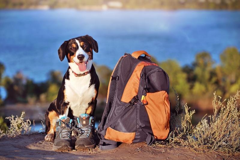 ausflug mit hund gepaeck