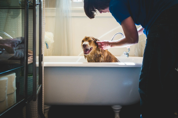 hund-badewanne