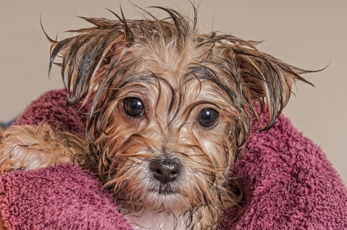 hundebaden-welpe Hundebaden