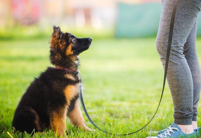 Jeder Hund braucht eine Ausbildung Naturkausnacks