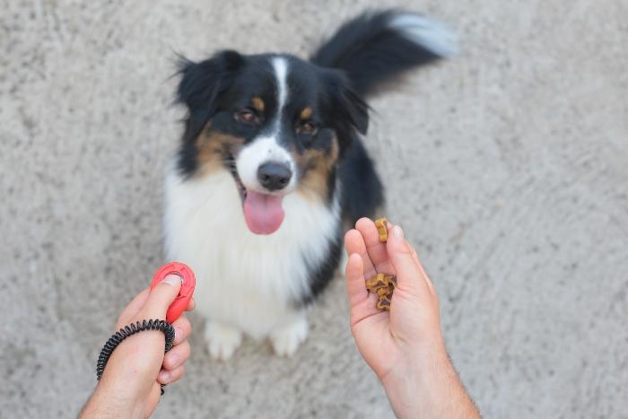 Tipps fuer das Hundetraining mit Leckerli Naturkausnacks