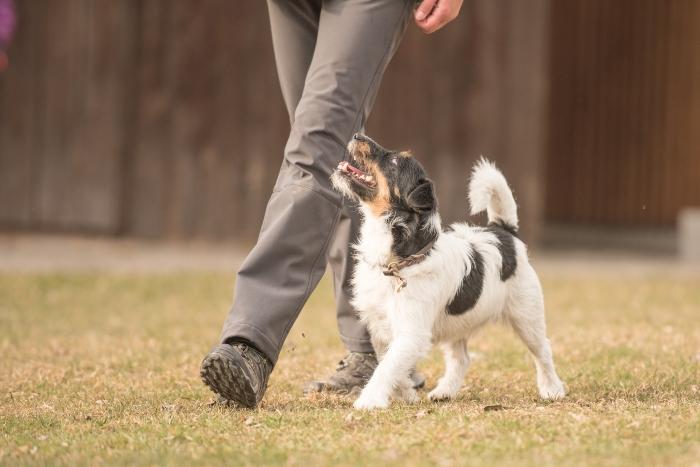 perfekte-fussarbeit-hund Naturkausnacks