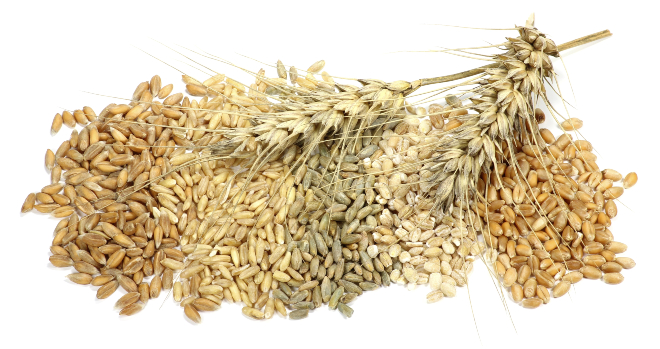 Getreidekörner-Dinkel-Hafer-Roggen-Gerste-Weizen