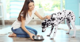 Frauchen füttert Dalmatiner Hund