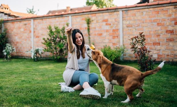 Hund bekommt Leckerli von Frauchen