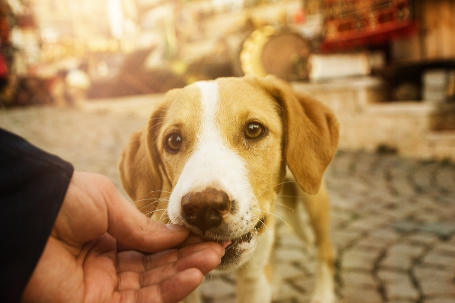 gesunde-hundeleckerlis-herkunft