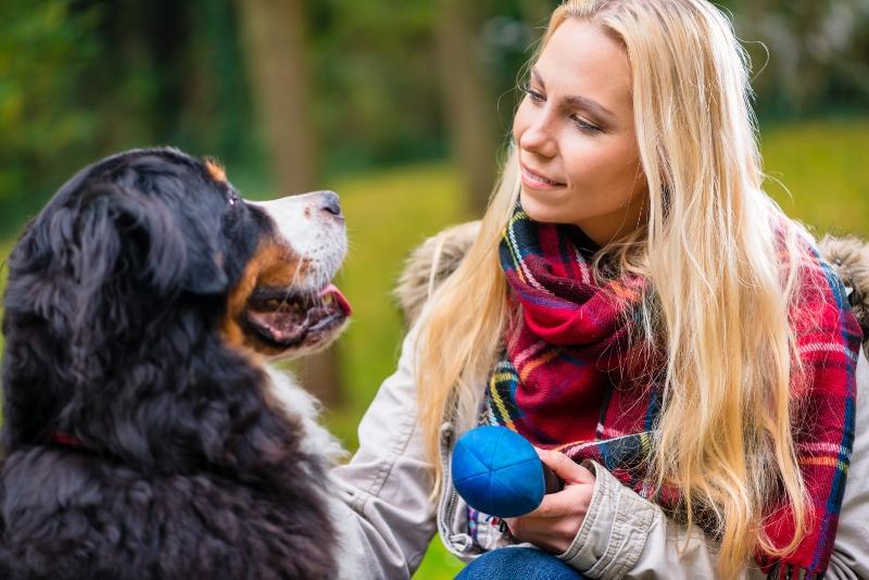 Apportierspiele mit dem Hund Apportieren ueben