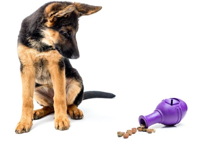 Futterspielzeug für einen Hund
