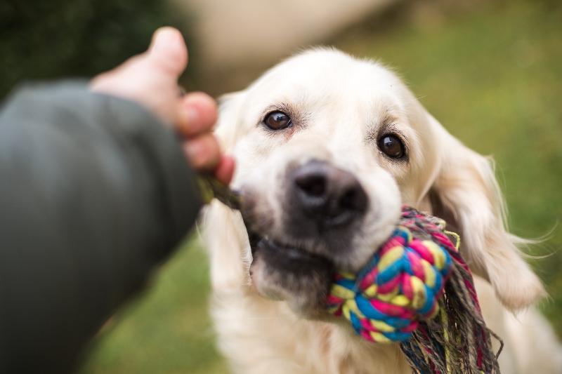Spielender Hund Apportieren ueben