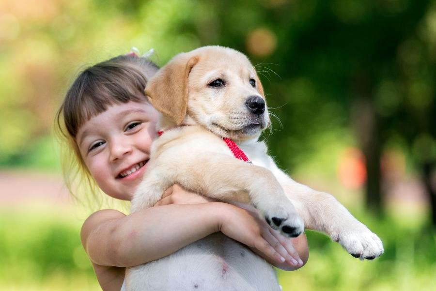 kleines-maedchen-mit-einem-golden-retriever-welpen Hund kaufen oder adoptieren