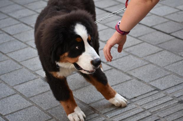 Ein ängstlicher Hund schreckt vor der einer ausgestreckten Hand zurück Unsicherheit bei Hunden