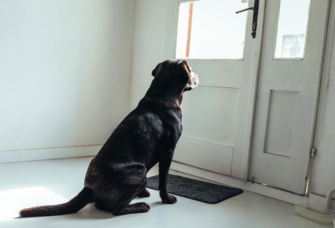 Ein Hund sitzt vor der Tür und warten auf die Rückkehr seines Herrchens