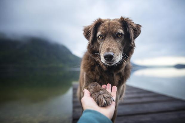 Ein ängstlicher Hund reicht beim Training seinem Herrchen vorsichtig das Pfötchen Unsicherheit bei Hunden