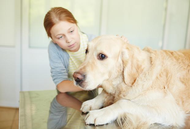 Ein Hund blickt vorsichtig drein, während ein kleines Mädchen versucht, ihn zu beruhigen Unsicherheit bei Hunden