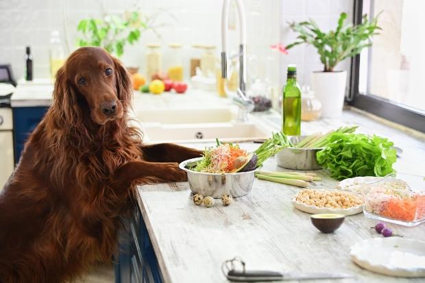Hund sitzt vor Tisch mit vegetarischem Essen - pflanzliche Ernährung für den Hund