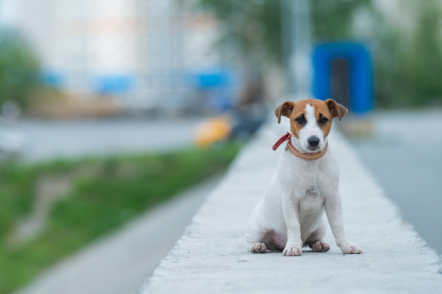 Trauriger Hund - Meideverhalten bei Hunden