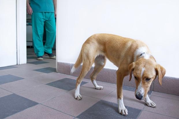 Hund ängstlich in einer Tierarztpraxis - Meideverhalten bei Hunden