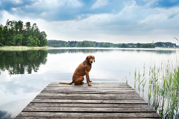 Hund sitzt auf Steg am See