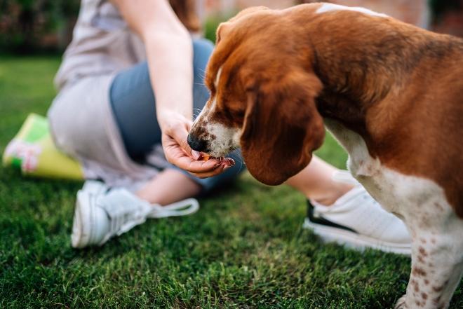 Frauchen füttert ihr Tier mit Snacks aus Kamelfleisch für Hunde