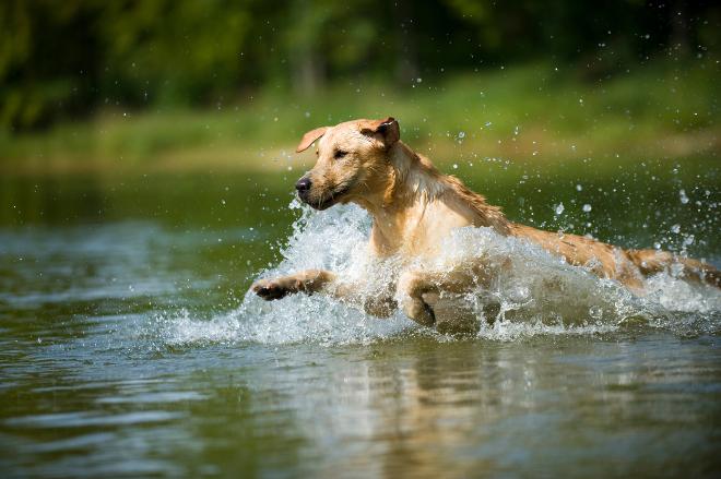 Hund springt ins Wasser am See