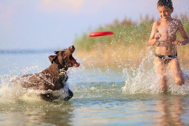 Junge spielt Frisbee mit Hund am See -Urlaub mit Hund am See