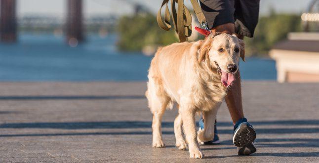 Gesunder Hund beim Spaziergang