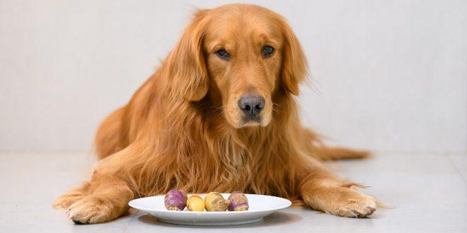 Kausnacks und Futter für empfindliche Hunde