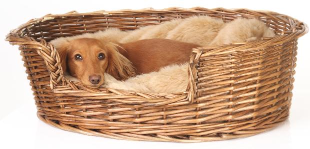 Hund liegt in Körbchen