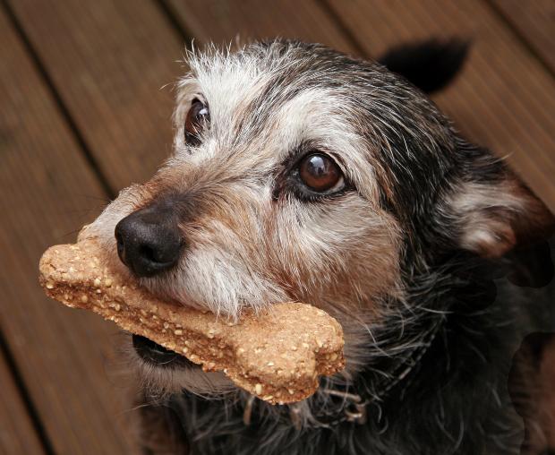 Hund mit Getreideriegel im Maul - Leckeres Hundebrot