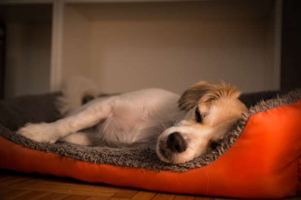 Hund schläft im Hundebettchen