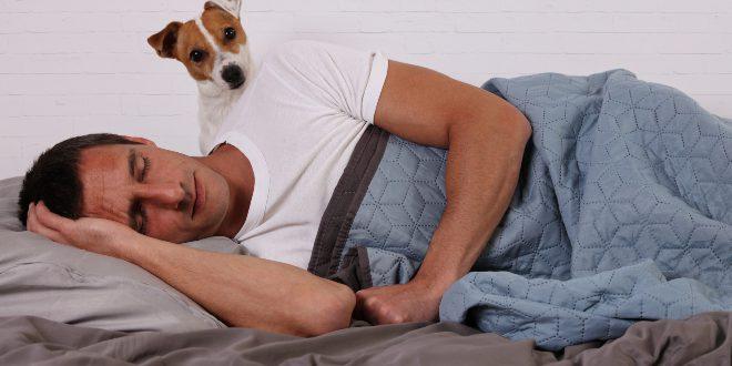 Hund weckt Herrchen -Hund wird nachts immer wach