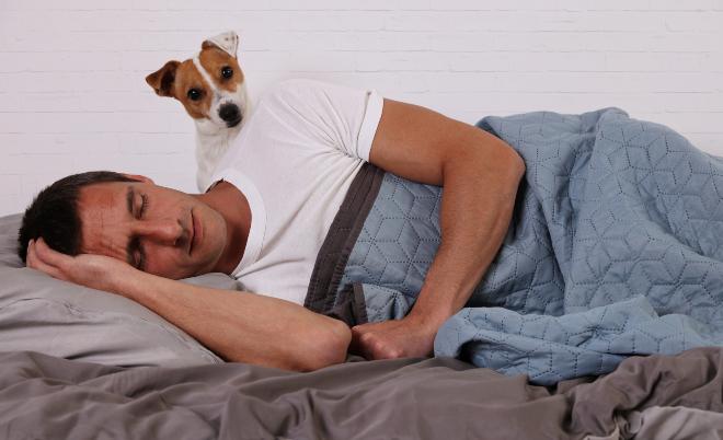 Hund Wird Nachts Immer Wach Hunde Kausnacks Magazin
