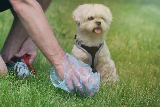 Mann hebt Hundehäufchen auf - empfindliche Hunde