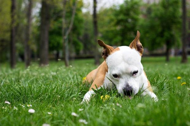 Hund frisst Gras - richtiges Futter für empfindliche Hunde