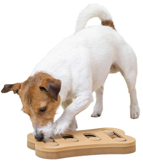 Hund spielt mit einem IntelligenzSPiel